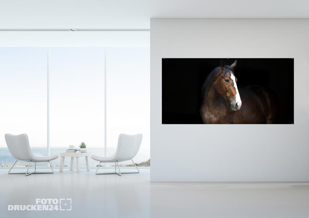 Acrylglasfoto mit Pferde-Motiv